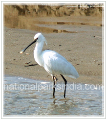 endemic species india